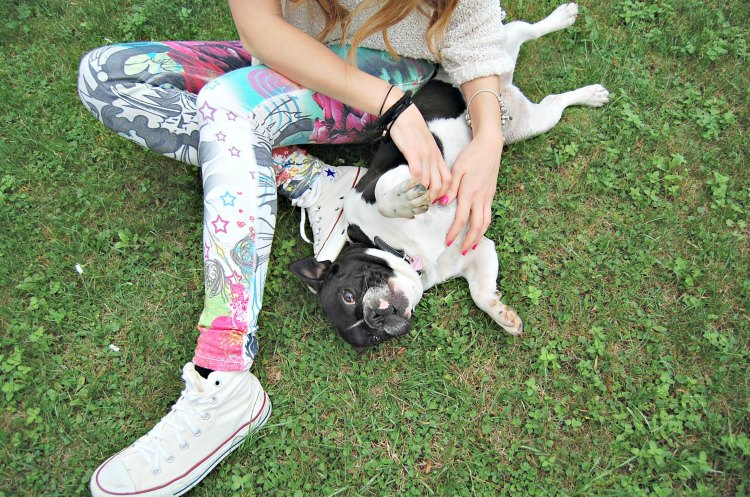 12 10third fashion italian blogger super h&m skinny vans puppy doggie french bulldog